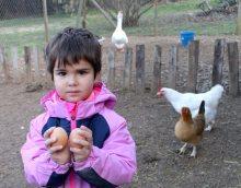 dos huevos