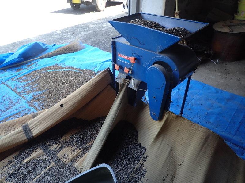 青いのが唐箕。手前から奥側へ風を送ることで、軽い実や、ゴミを吹き飛ばし、重い種子だけを選別する。