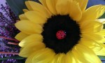 Fresh Flowers – Fiona's Flowerpower Shop