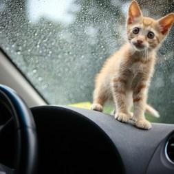 New Foster Kitten: Max