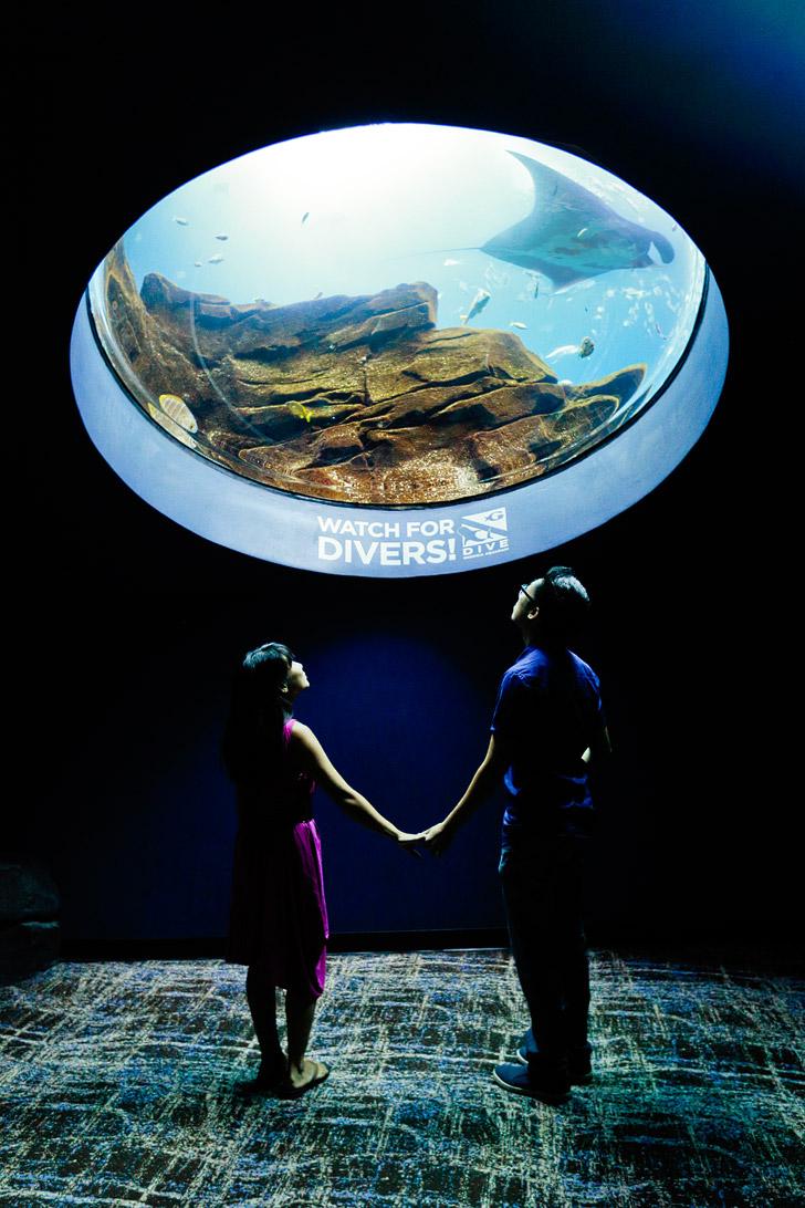 The Aquarium in Atlanta is the Second Largest Aquarium in the World // localadventurer.com
