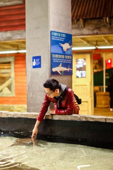 Interactive Exhibits at the Georgia Aquarium Atlanta GA // localadventurer.com