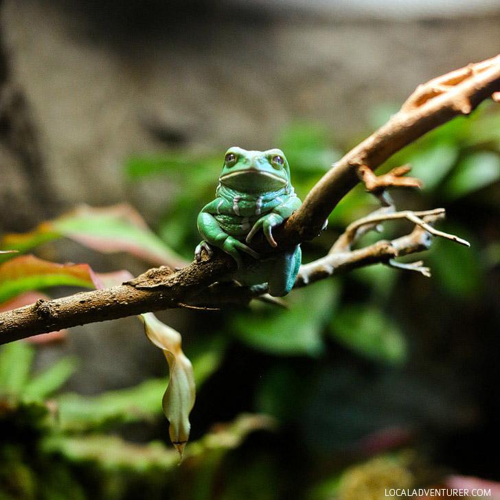 Georgia Aquarium Frogs - A Chorus of Colors // localadventurer.com