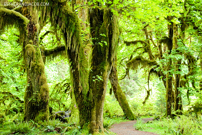 Hoh Rainforest Olympic National Park {25 Epic National Parks in America You Must See}