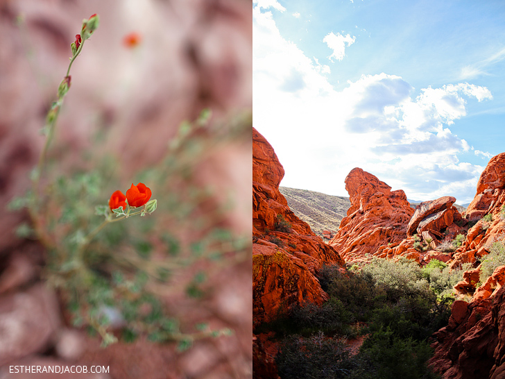 Red rock canyon national conservation area | Red Springs Loop or Calico Loop.
