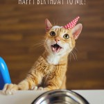 Happy Birthday to Us – A Cat Birthday Celebration!