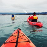 Kayaking in Monterey Bay with Adventures By the Sea