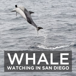 Whale Watching San Diego with Pacific Nature Tours