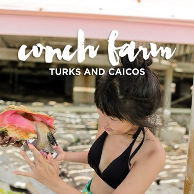 Providenciales Turks and Caicos Conch Farm - Only One in the World!