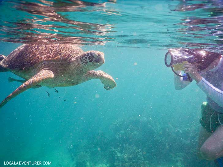 Swimming with Endangered Green Sea Turtles in Indonesia - Where You're Almost Guaranteed to See One! // localadventurer.com