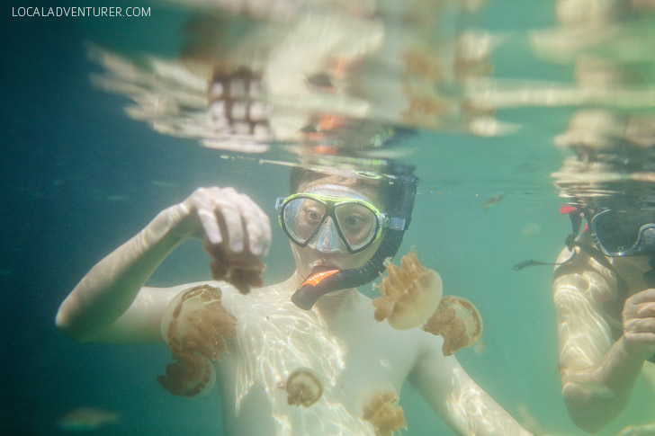 Swimming with Jellyfish - There are two places in the world where you can do this - Palau and Derawan Islands // localadventurer.com