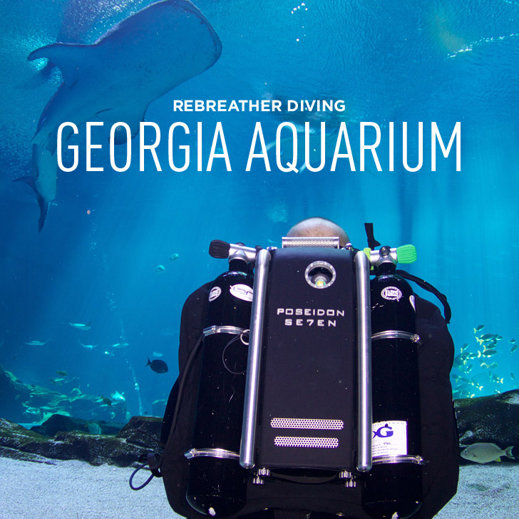 What it's like Rebreather Diving in the Georgia Aquarium // localadventurer.com