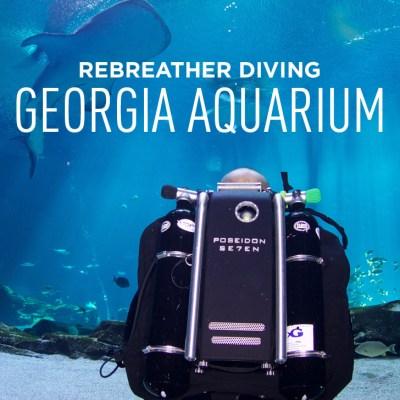 Scuba Diving in the Georgia Aquarium - Journey with Gentle Giants Closed Circuit Rebreather Dive Program // localadventurer.com