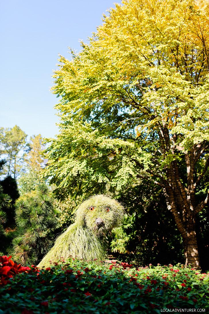 Living Sculptures at Atlanta Botanical Garden // localadventurer.com