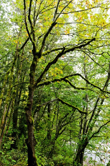 John Yeon State Park in Oregon // localadventurer.com