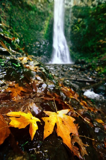 Double Falls - Silver Falls State Park Oregon // localadventurer.com