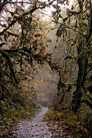 Silver Falls State Park Hikes, Oregon USA // localadventurer.com