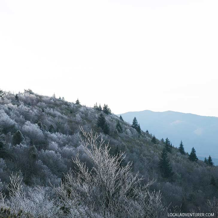Black Balsam near Asheville NC - If you hike this, you'll be climbing the 23rd highest of the 40 mountains in North Carolina that are over 6,000 feet // localadventurer.com