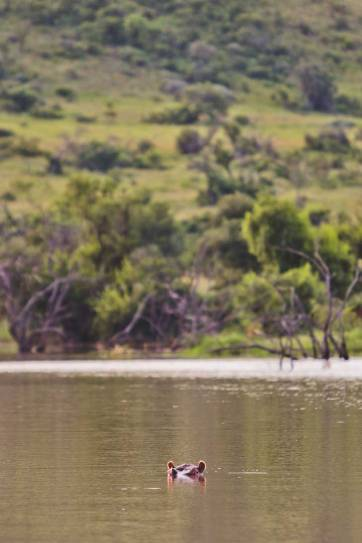 Pilanesberg Reserve with Go SAfari - an Amazing Day Trip from Johannesburg South Africa // localadventurer.com