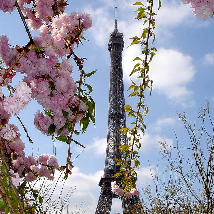 Paris, France - Best Places to See Cherry Blossoms in the World - See them at Petit Palais, south facade of the Notre Dame, the Square Gabriel Pierné, Jardin des Plantes // localadventurer.com