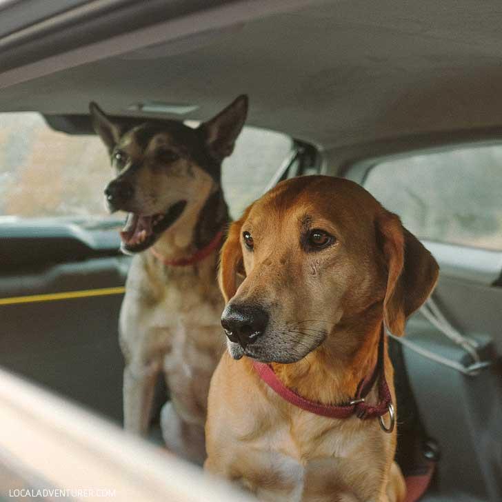 How to Travel with a Dog - Essential Dog Travel Tips // localadventurer.com