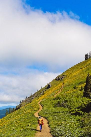 Dog Mountain Trail - Best Wildflower Hike Near Portland Oregon // localadventurer.com