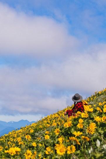 Dog Mountain Hike - Best Wildflower Hike Near Portland Oregon // localadenturer.com