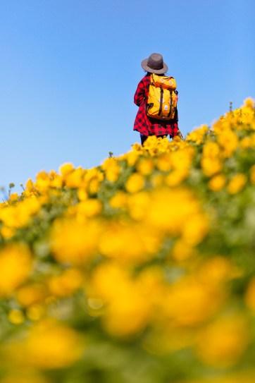 Hiking Dog Mountain - Best Wildflower Hike Near Portland Oregon // localadventurer.com