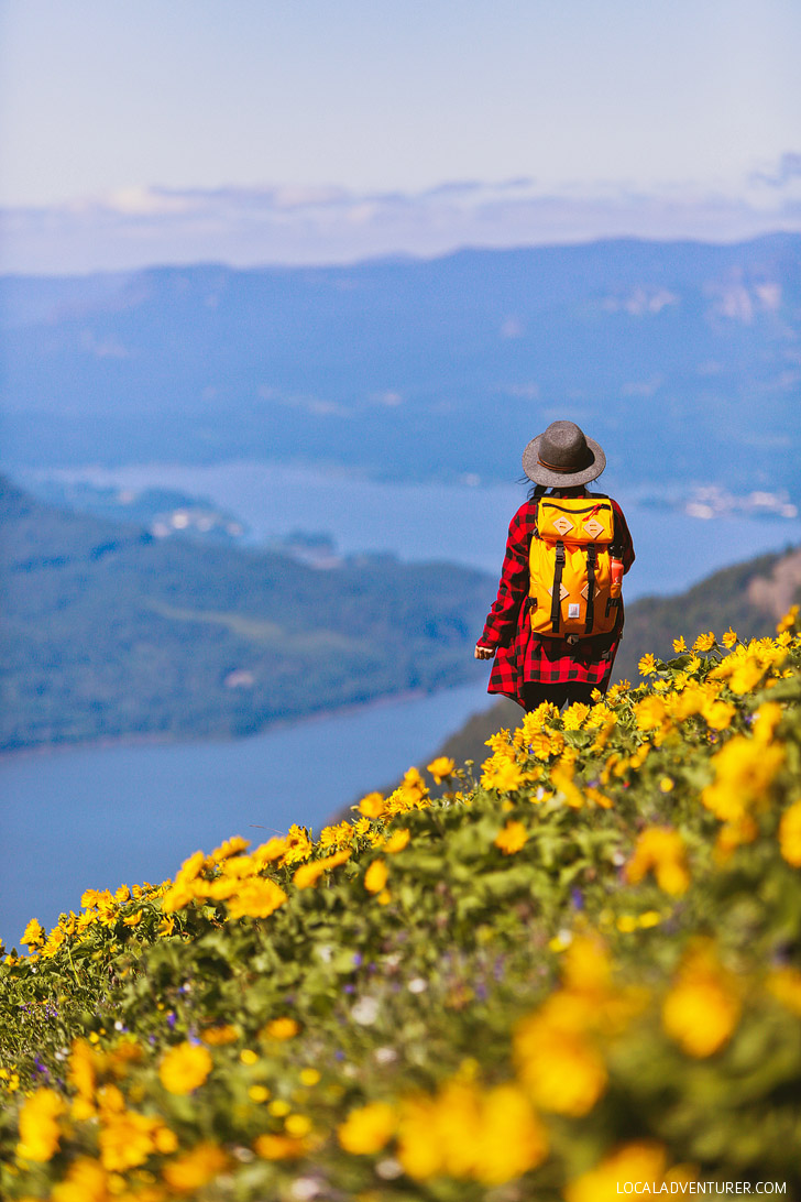 Dog Mountain Trail, Columbia RIver Gorge National Scenic Area, Washington // localadventurer.com