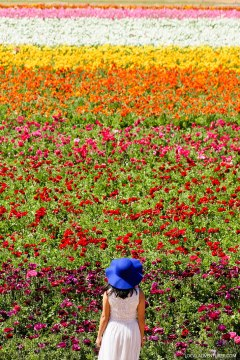Carlsbad Flower Fields + All the Best Places to Stop on the Pacific Coast Highway California // localadventurer.com