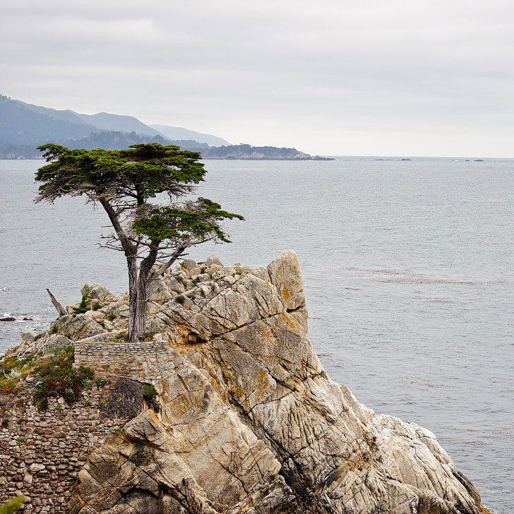The 17 Mile Drive in Monterey California - Your Essential Pacific Coast Highway Road Trip Guide // Local Adventurer
