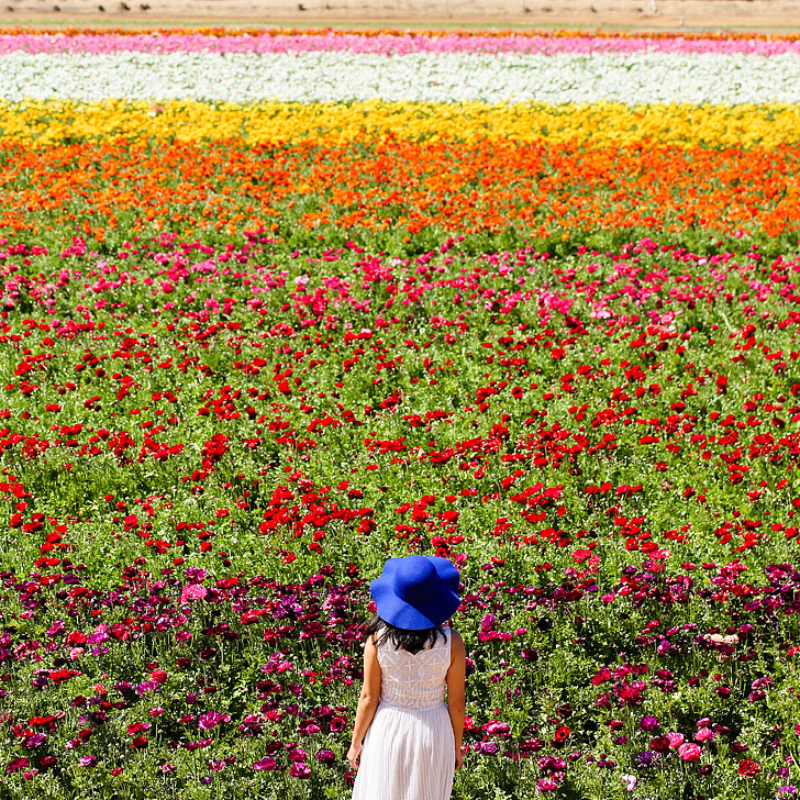 The Flower Fields in Carlsbad + All the Best Places to Stop on the Pacific Coast Highway California // Local Adventurer