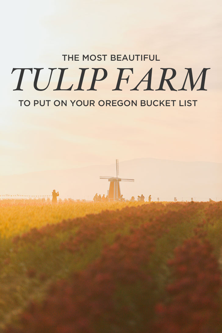 The Most Beautiful Tulip Farm to Put on Your Oregon Bucket List + More Tulip Festivals in the US You Must Visit // Local Adventurer