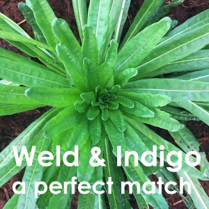 weld and indigo