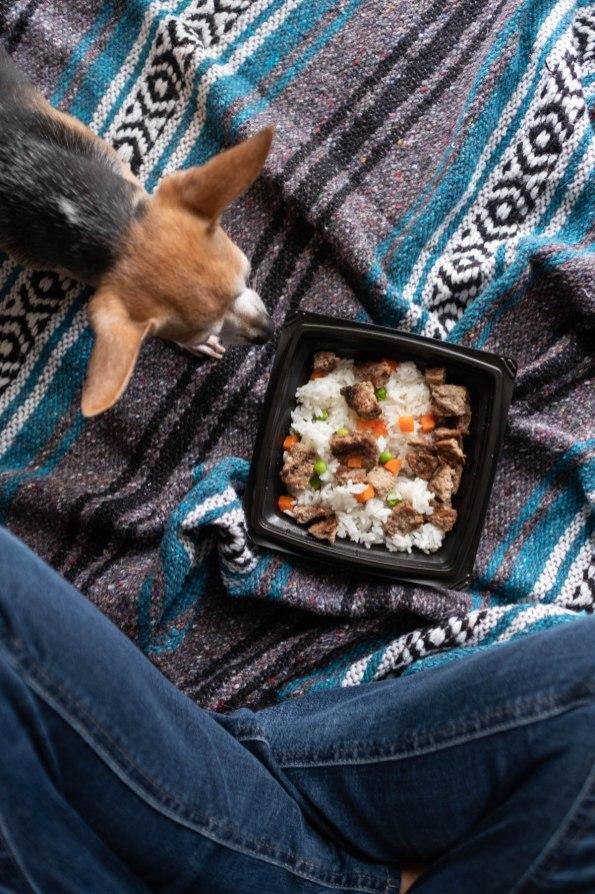 Photography Provided By: Lazy Dog Restaurants