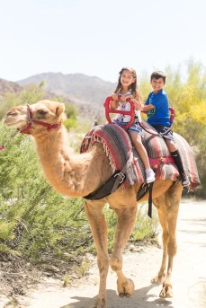 Camel Rides, The Living Desert
