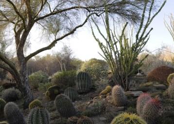Gardens 4, The Living Desert