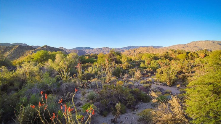 The Living Desert Aerial Photo
