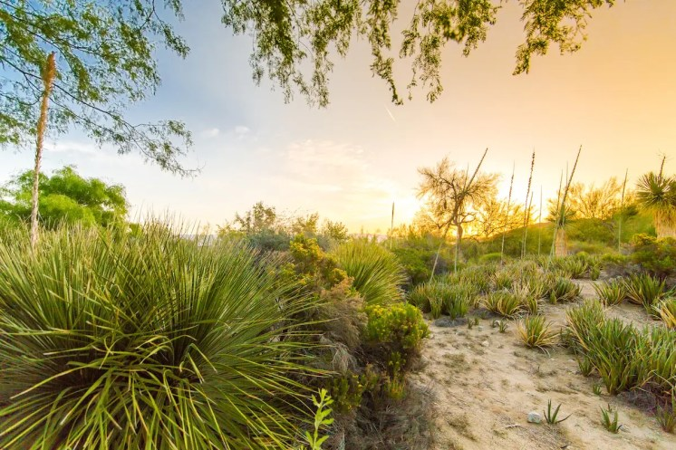 The Living Desert Gardens at dawn