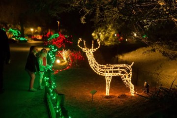 TLD WildLights - Wildlights The Living Desert Zoo And Gardens December 31