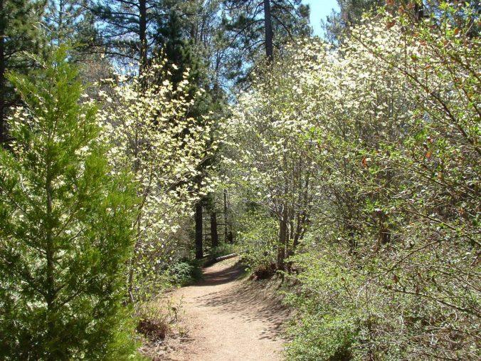 Photography Provided By: Tim Wilcox, Heaps Peak Arboretum