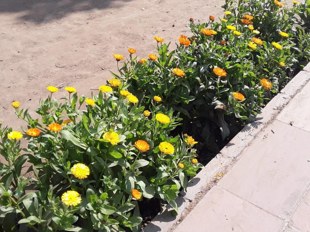 lodhi garden new delhi flower