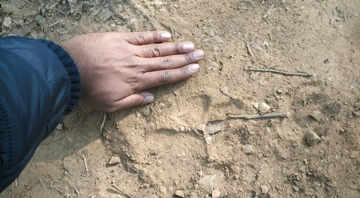 jim corbett adventure pugmark the size of my palm