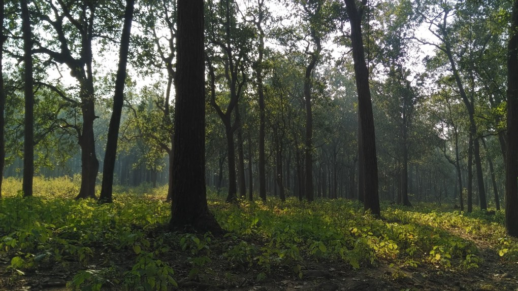 A3 forest tall trees Jim Corbett National Park article one