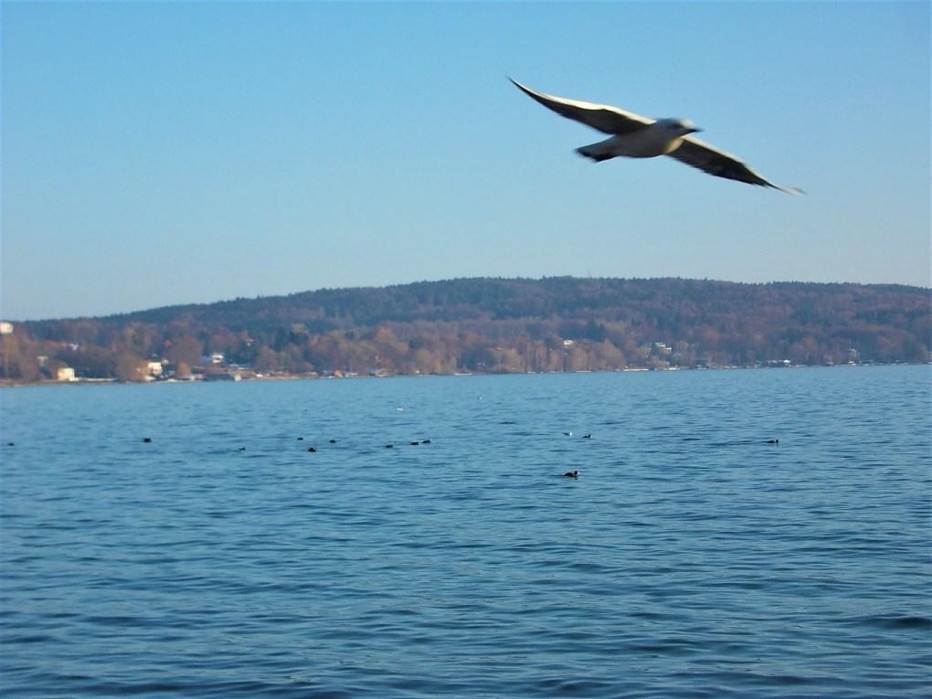 starnberg bird