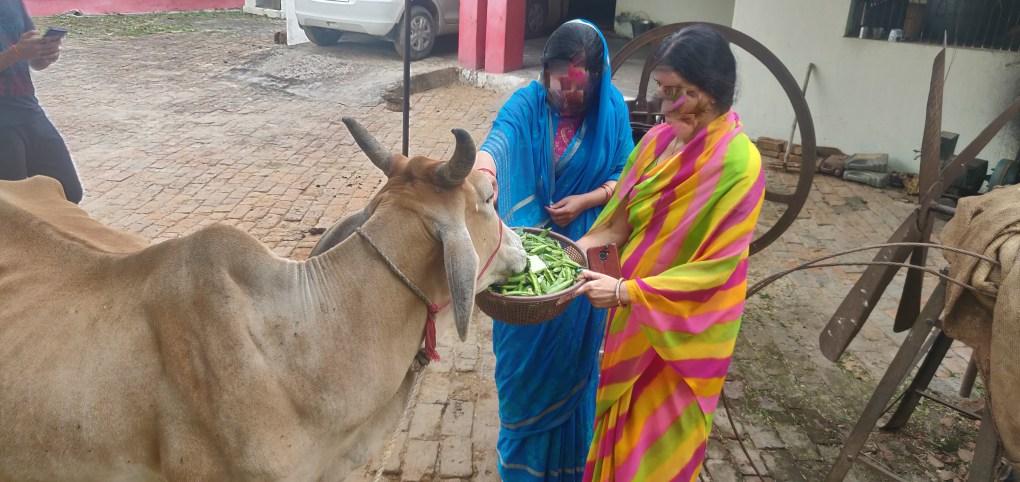belpar village gorakhpur ladies feeding cattle
