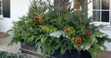 Outdoor planters offer winter long beauty