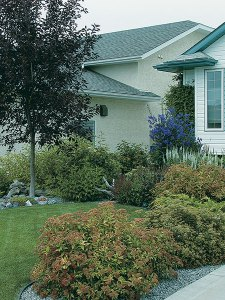 Homeowners use rock to mulch tree and shrub beds.