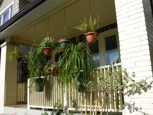 The porch at the front of the house is decorated summer long with tropicals.