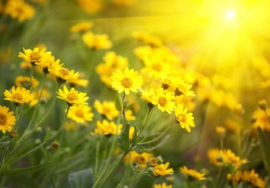 Plant Strengtheners: Help for summer-stressed plants